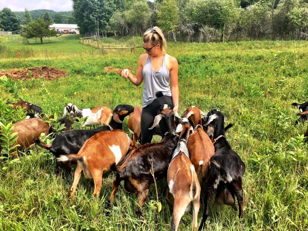 Pasture walk with goats